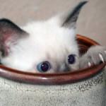 cats_hiding_19